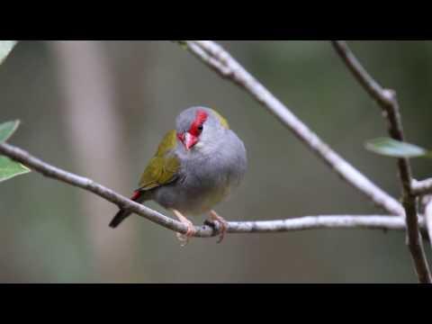 Atherton Tablelands Birdwatching Cabin - Wondecla, Queensland