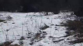 участок ИЖС п.Терваярви Лахденпохский район Карелия(, 2016-04-28T05:14:59.000Z)