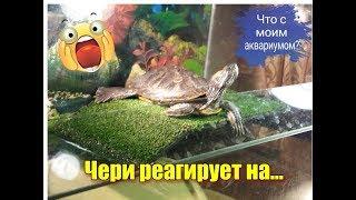 Чери реагирует на... / Что с аквариумом? / Тайная жизнь домашних животных