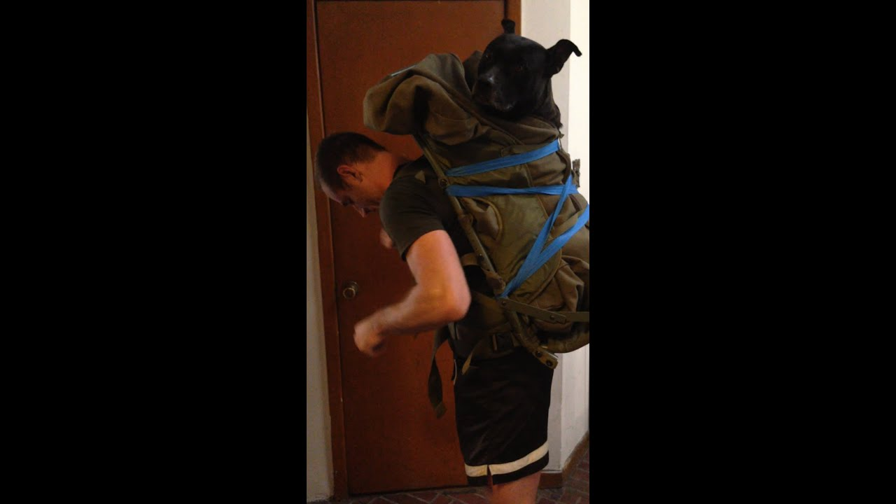 Large Dog Backpack for Biking - YouTube