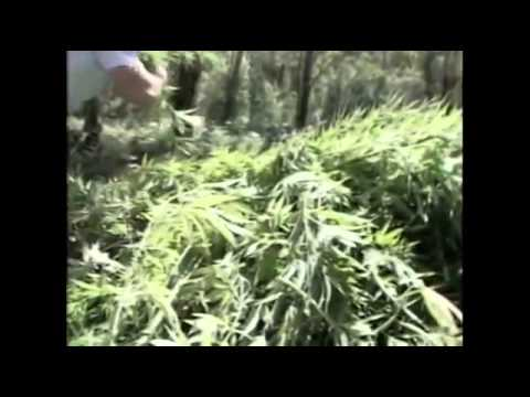 The Hemp Revolution 1995 documentary