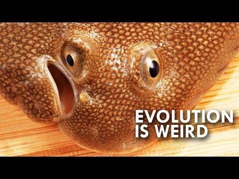When Evolution Gets Weird