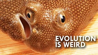 When Evolution Gets Weird