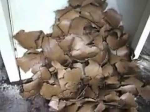 100 oil press process rapeseed