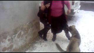 мальчик против дикого пса