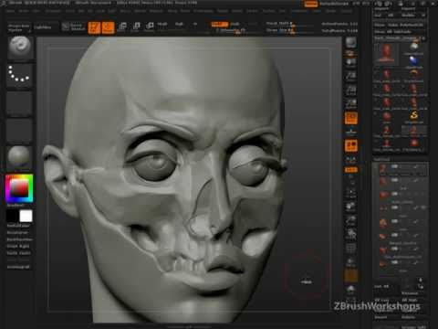 Anatomy of the Face for Artists: Why Anatomy?