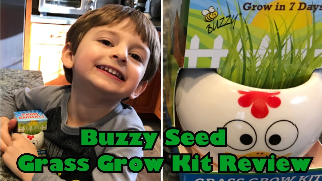 Buzzy Seeds Grass Grow Kit Review Youtube