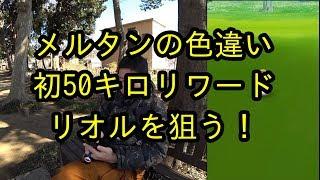 【ポケモンGO】メルタンの色違いと初50キロ達成でリオルを狙う!