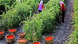 ягоды годжи купить в беларуси