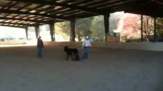 Mini Horses at Play - Miniature Horses Frolic at Jasper Ridge Farm.