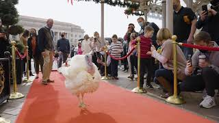 2020 Thanksgiving Turkeys Arrive in Washington D.C.
