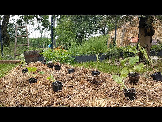Plantations 2020 - LMQDN
