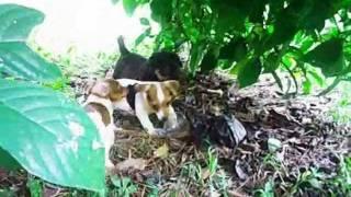 Jack Russell,weimaraner,rottweiler,husky,musica:miguel Mateos ,cuando Seas Grande
