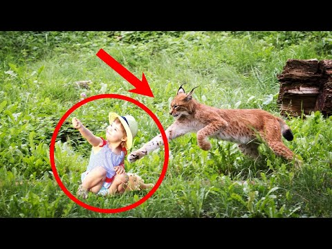 Мать НЕ МОГЛА поверить в то, что с ее дочкой СДЕЛАЛА спасенная рысь
