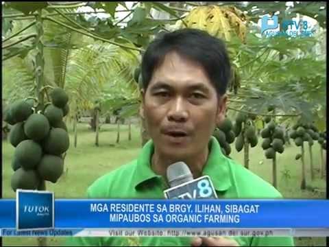PTV8 featured FFF Ilihan Bio-farming Cluster - Organic Farming of Papaya
