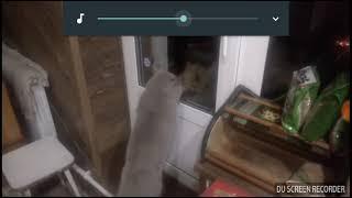 Говорящие коты приколы с котами подборка видео с котами🐱🐱🐈🐈🐈🐱🐱🐱