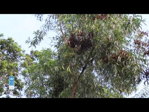Les Acacias pour protéger l'environnement
