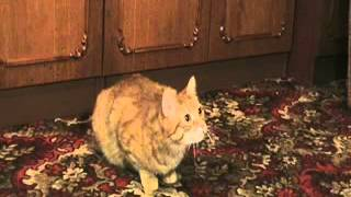 Мой кот учится говорить