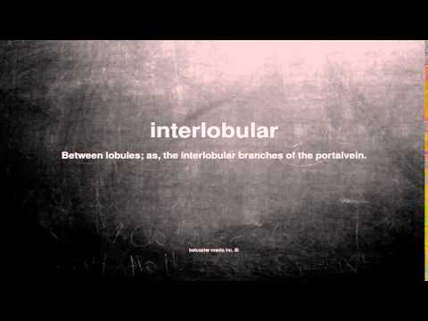 What does interlobular mean
