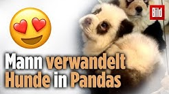 Mann verwandelt Pandas in Hunde: Das süßeste Hundehotel in China