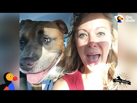 Pit Bull Dog Screams Like A Person When Hes Happy  The Dodo Pittie Nation