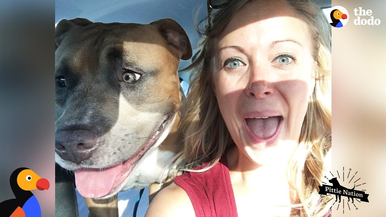 Pit Bull Dog Screams Like A Person When He's Happy