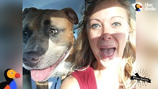 Pit Bull Dog Screams Like A Person When He's Happy | The Dodo Pittie Nation thumbnail