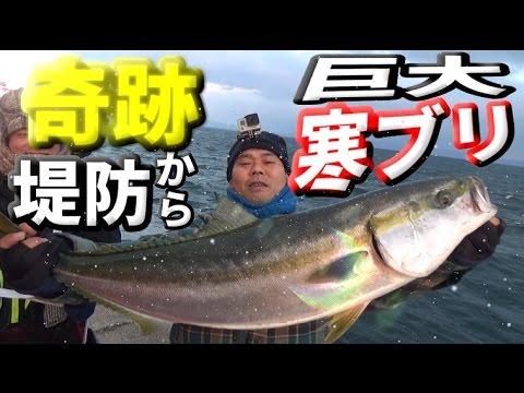 【奇跡】堤防から巨大寒ブリを釣る!【高級】