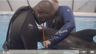 Audubon Aquarium of the Americas Rescues Dolphin