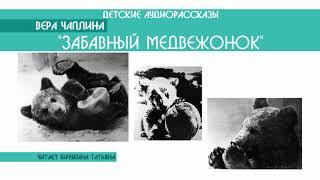 """Вера Чаплина """"Забавный медвежонок"""" - детский аудиорассказ: слушать онлайн"""
