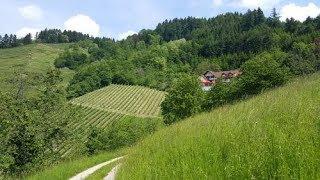 Wine Trail Germany
