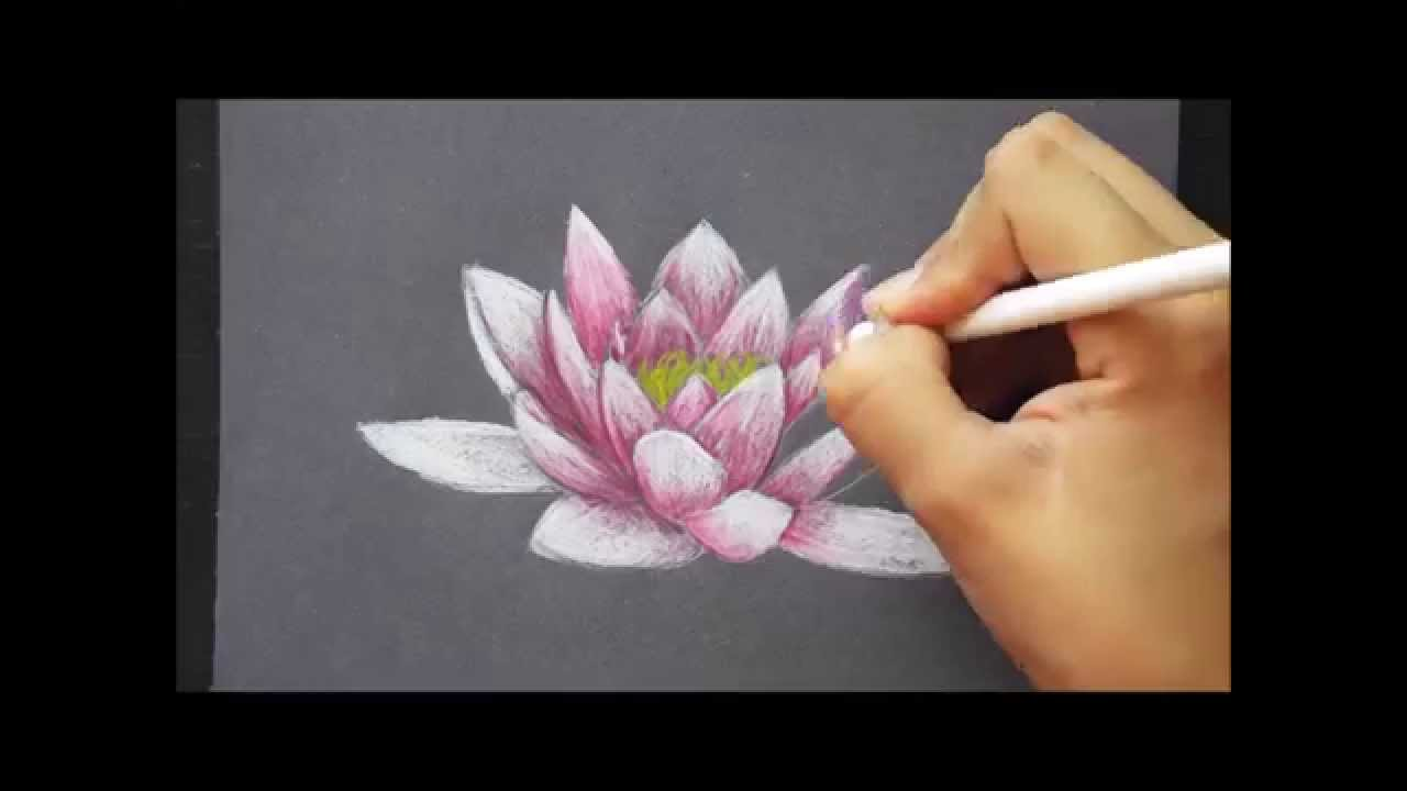 Water Lily / Prismacolor Drawing - YouTube