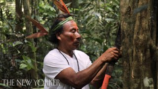 Fighting COVID-19 with Ancestral Wisdom in the Amazon | The New Yorker