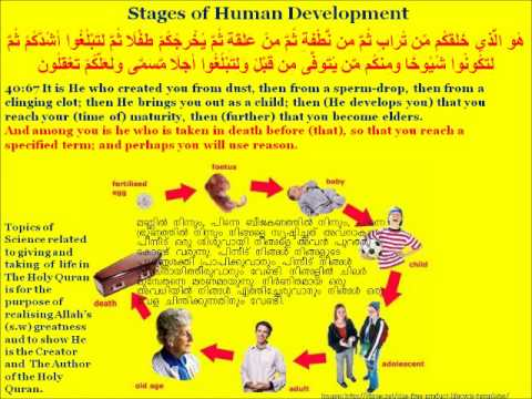 Stages of Human Development - YouTube