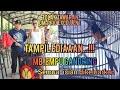 Tolak Tawaran Om Prio Exellent Murai Batu  Empu Gandring  Tampil Istimewa Di Road To Kli La Cup   Mp3 - Mp4 Download