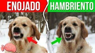 10 Formas De Entender Lo Que DICE TU PERRO thumbnail