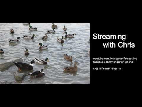 Live Stream - Smog in Budapest & Fun Hungarian Music