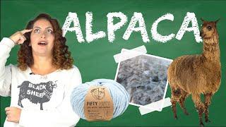 Why do people love Alpaca Yarn so much? - Yarn University #10