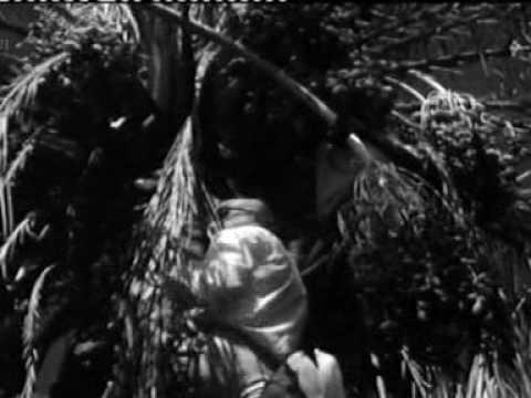 kekkonen kiipesi palmuun