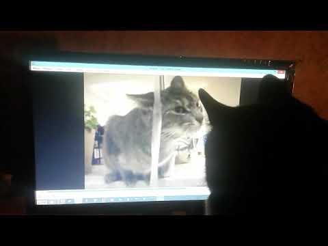 Horror movie for cats (Кошачий фильм ужасов)