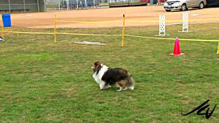 Huckleberry Hounds, Kelowna Bc - Dog Agility Competition