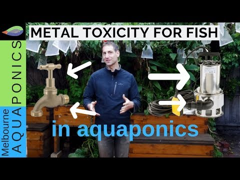 Metal Toxicity For Fish | Water Quality