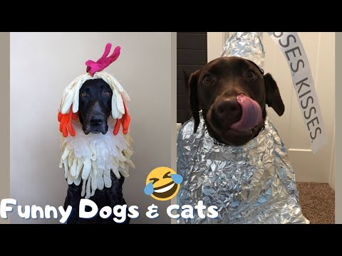 Funniest cute cats and dogs videos - try not to laugh or grin challenge