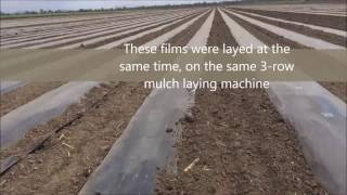 Solar Shrink Mulch film - North Queensland, Australia