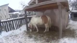 Уход за лошадью. Кормление зимой.