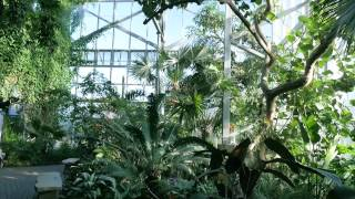 The Fred Dorothy Fichter Butterflies Are Blooming At Frederik Meijer Gardens Youtube