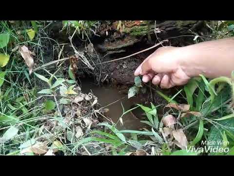 Mancing lembat rawa sawitan