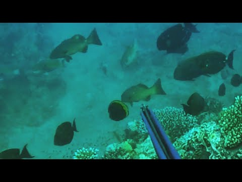 Spearfishing Australia 2018, CAIRNS QUEENSLAND! (FNQ)