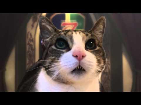 Rufie the Cat Prefers Tuna