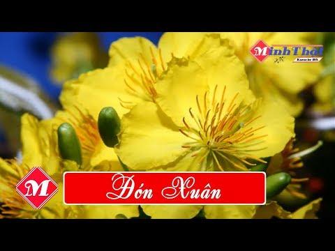 Đón Xuân Karaoke || HD || Beat chuẩn